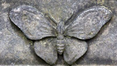 Kelebek Define İşareti Anlamı