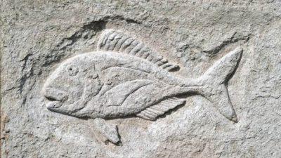 Balık İşareti Ve Anlamları